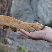 I jak tu nie kochać psa – Dzień kundelka